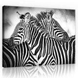 Zebra Black-White Canvas Schilderij PP10159O1_