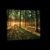 Sunny Forest Canvas Schilderij PP20006O4_