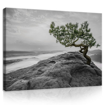 The tree on the rock Canvas Schilderij PP11759O1