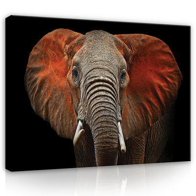 Elephant with red ears Canvas Schilderij PP11752O1