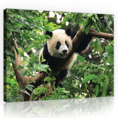 Panda Bear on the Tree Canvas Schilderij PP10238O1