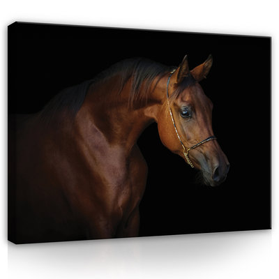 Brown horse on black background Canvas Schilderij PP13602O1