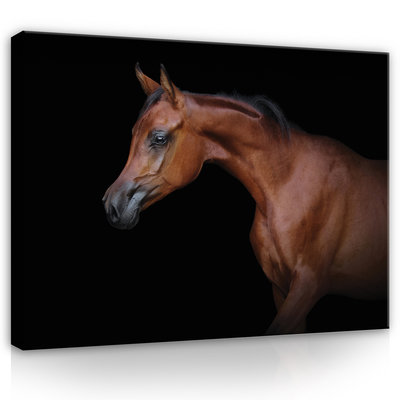 Brown horse on black background Canvas Schilderij PP13601O1