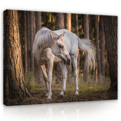 White horse in the forest Canvas Schilderij PP13599O1