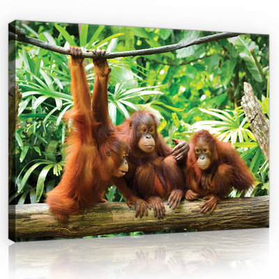 Orangutans in the Jungle Canvas Schilderij PP10230O1