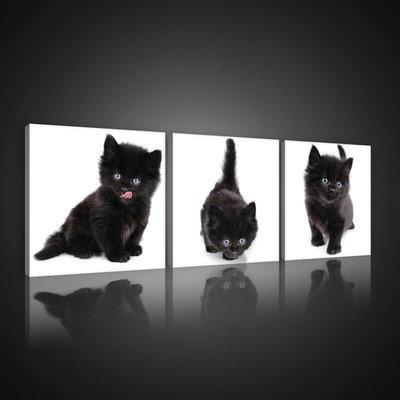 Black Kittens Canvas Schilderij PS10535S13