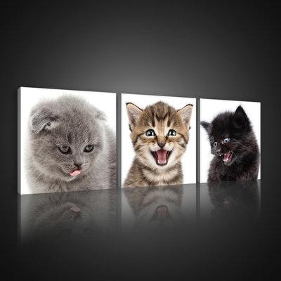 Cheerful Kittens Canvas Schilderij PS10534S13