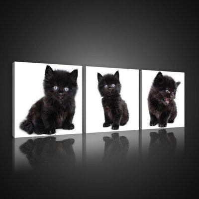 Black Kittens Canvas Schilderij PS10533S13