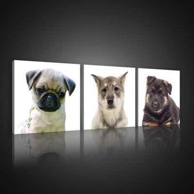 Puppies Canvas Schilderij PS10532S13