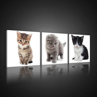Sweet Kittens Canvas Schilderij PS10531S13