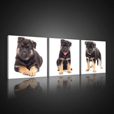 Cheerful Puppies Canvas Schilderij PS10530S13