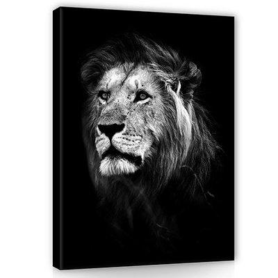 Leeuw Canvas Schilderij PP11768O1