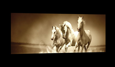 White Horses Galloping on Water Canvas Schilderij PP20299O3