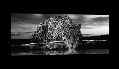Creeping Jaguar in Black and White Canvas Schilderij PP20285O3