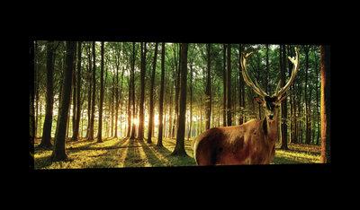 Deer in Sunny Forest  Canvas Schilderij PP20282O3