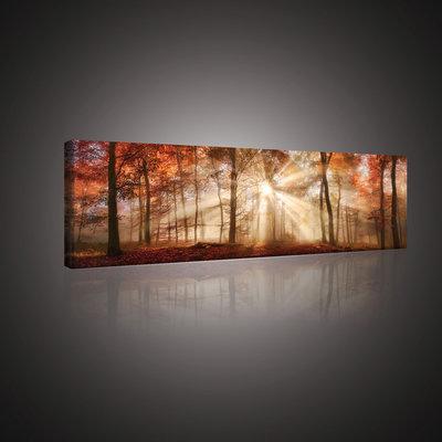 Autumn Forest in the Sun Canvas Schilderij PP10471O3