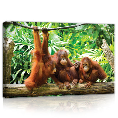 Orangutans in the Jungle Canvas Schilderij PP10230O4