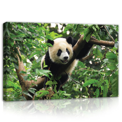 Panda Bear on the Tree Canvas Schilderij PP10238O4