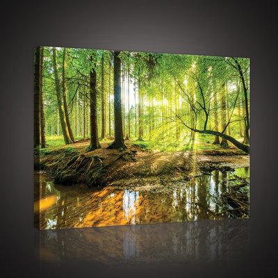 Sunny Forest Canvas Schilderij PP10513O4