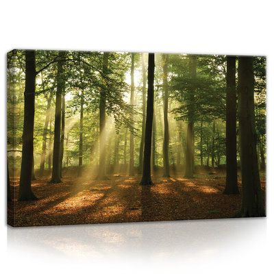 Forest in the Daylight Canvas Schilderij PP10331O4