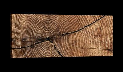 Cross Section of Tree Trunk Rings Canvas Schilderij PP20154O3