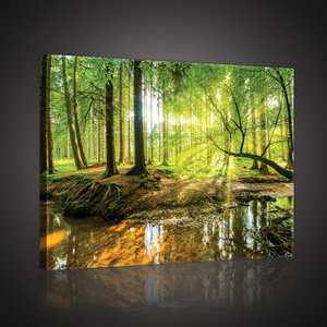 Sunny Forest Canvas Schilderij PP10513O4